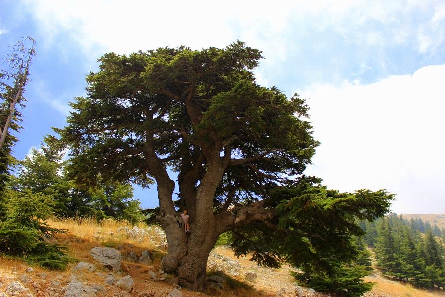 barouk cedars reserve
