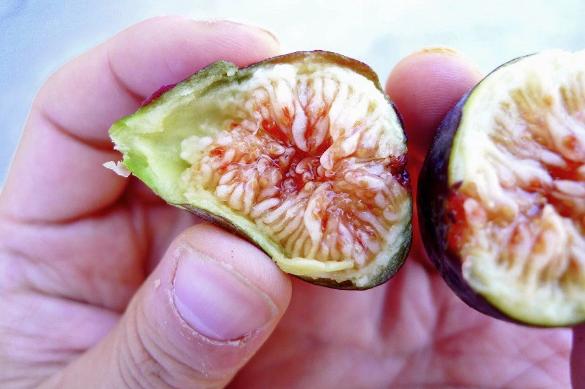 figs_fhf