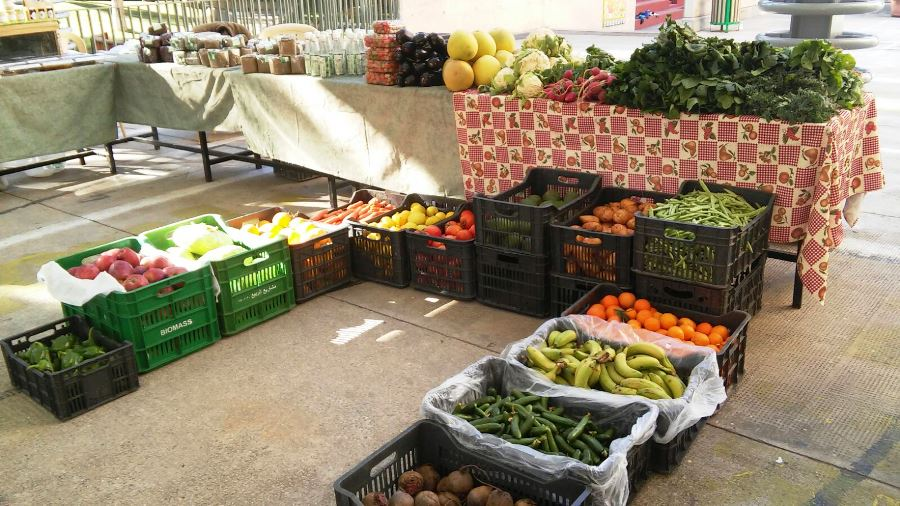 Organic fruits and vegetables proposed by the Healthy Basket