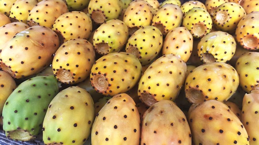 cactus fruit 3