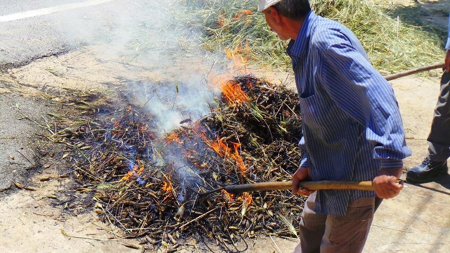 Roasting freekeh the traditional way, on the ground ©Rana Tanissa