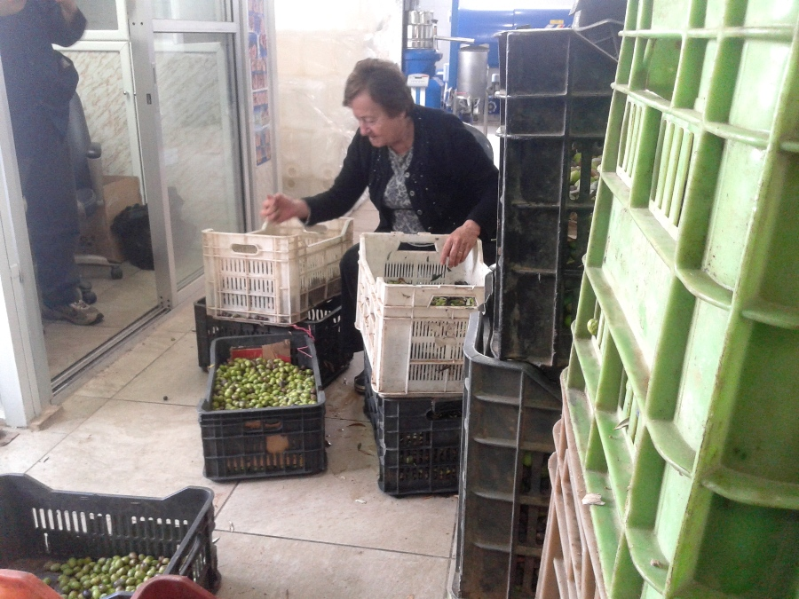 Bechara's mother sorting olives